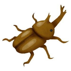 rhinoceros-beetle